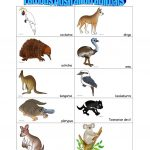 14 Free Esl Australian Animals Worksheets   Free Printable Pictures Of Australian Animals