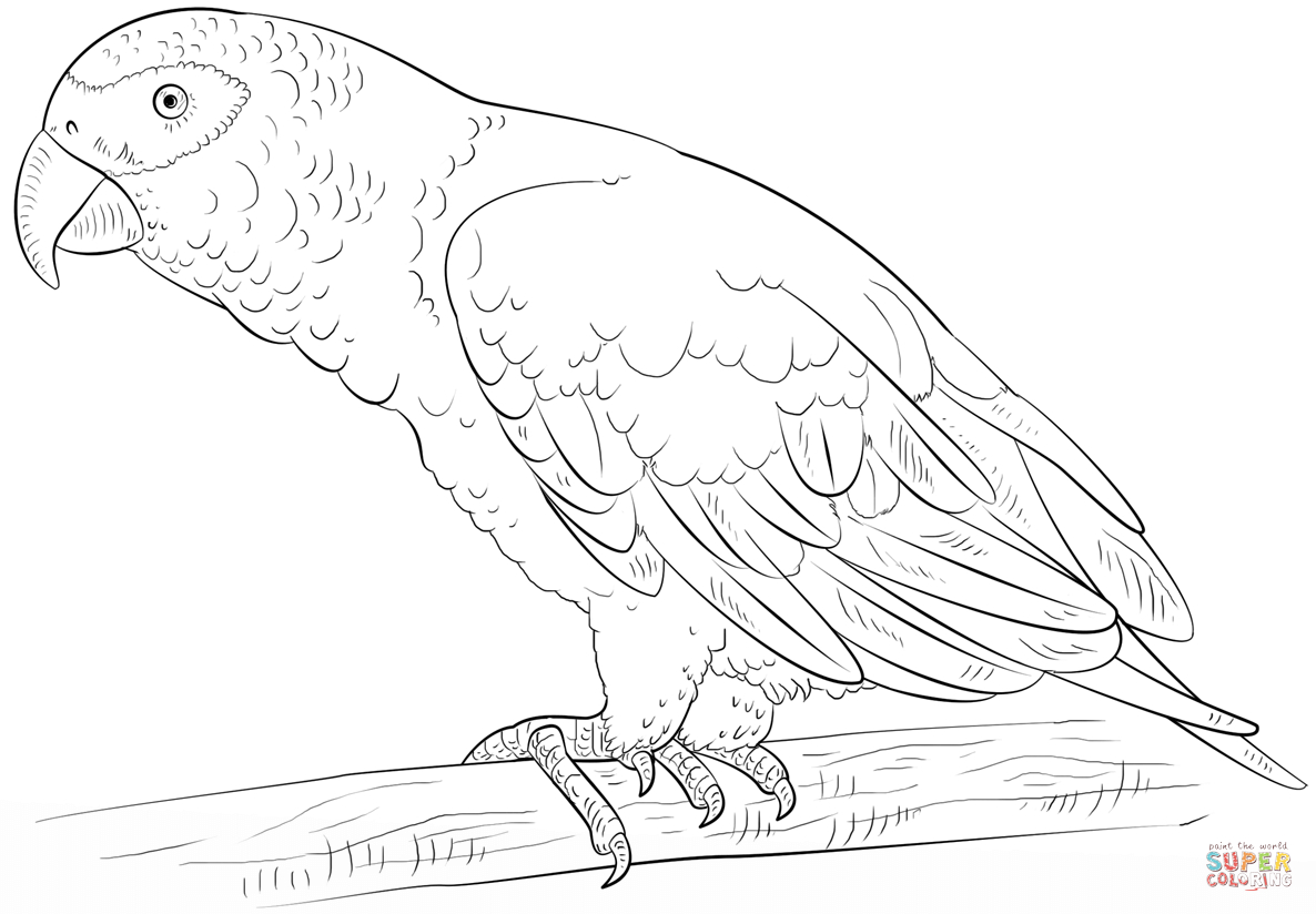 African Grey Parrot Coloring Page   Free Printable Coloring Pages - Free Printable Parrot Coloring Pages