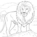 African Lion Coloring Page | Free Printable Coloring Pages   Free Printable Picture Of A Lion