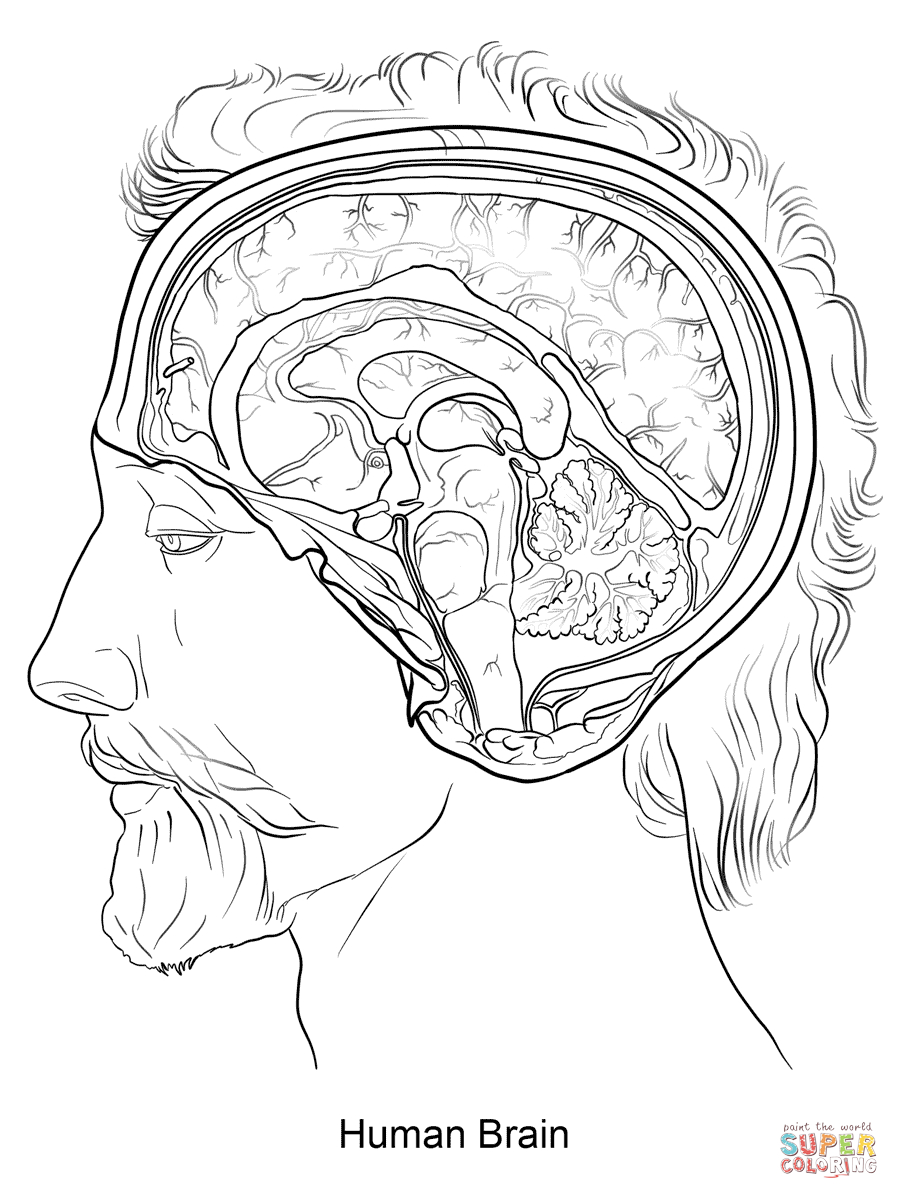 Anatomy Coloring Pages | Free Coloring Pages - Free Printable Human Anatomy Coloring Pages