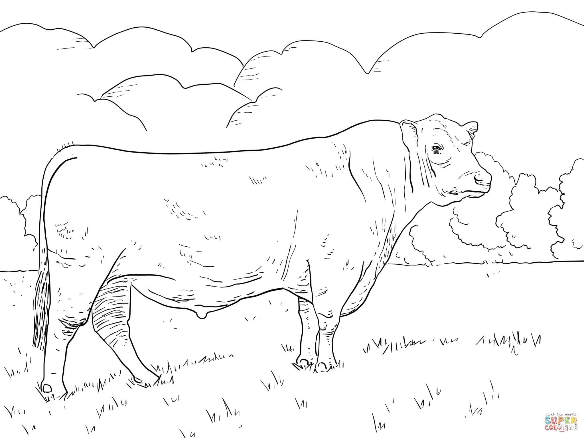 Angus Bull Coloring Page | Free Printable Coloring Pages - Coloring Pages Of Cows Free Printable