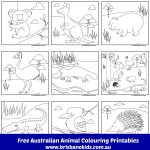 Australian Animals Colouring Pages | Australia | Pinterest   Free Printable Pictures Of Australian Animals