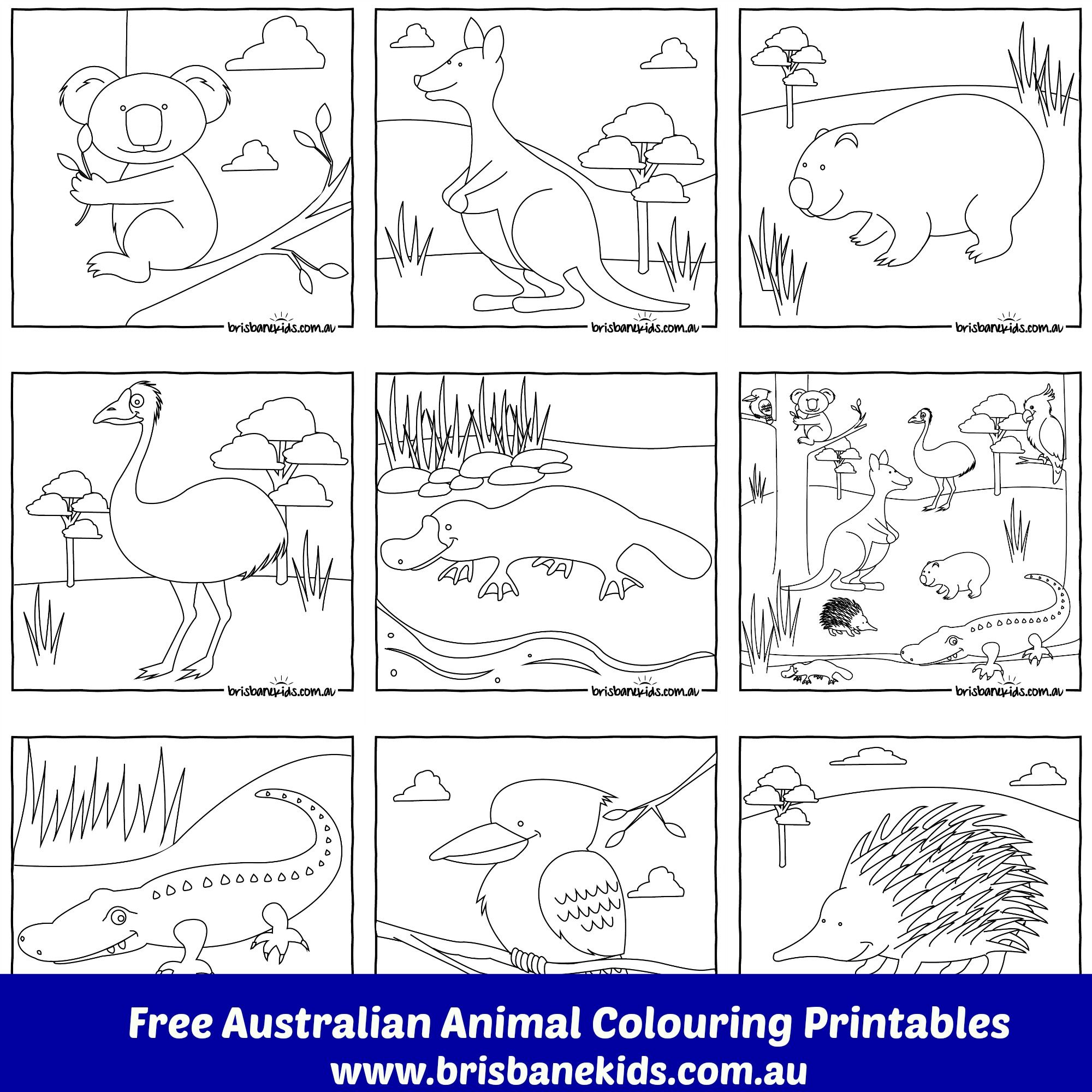 Australian Animals Colouring Pages | Australia | Pinterest - Free Printable Pictures Of Australian Animals