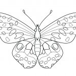 Butterfly Coloring Pages | Free Coloring Pages   Free Printable Butterfly Coloring Pages