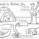 Coloriage Animaux Qui Hibernent : Viens T'amuser Gratuitement Sur   Free Printable Hibernation Worksheets