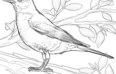Coloring Pages : Reliable Printable Pictures Of Birds To Color – Free Printable Images Of Birds
