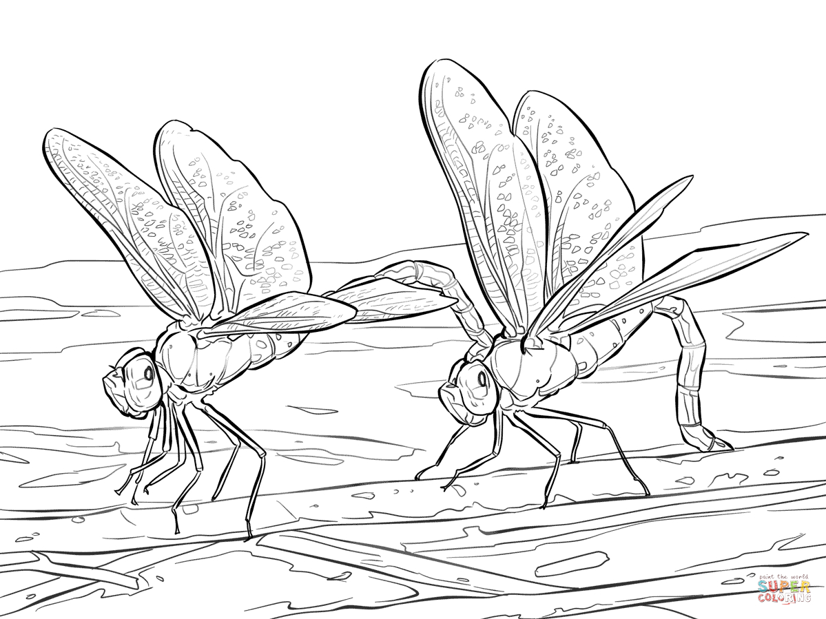 Dragonfly Coloring Pages | Free Coloring Pages - Free Printable Pictures Of Dragonflies