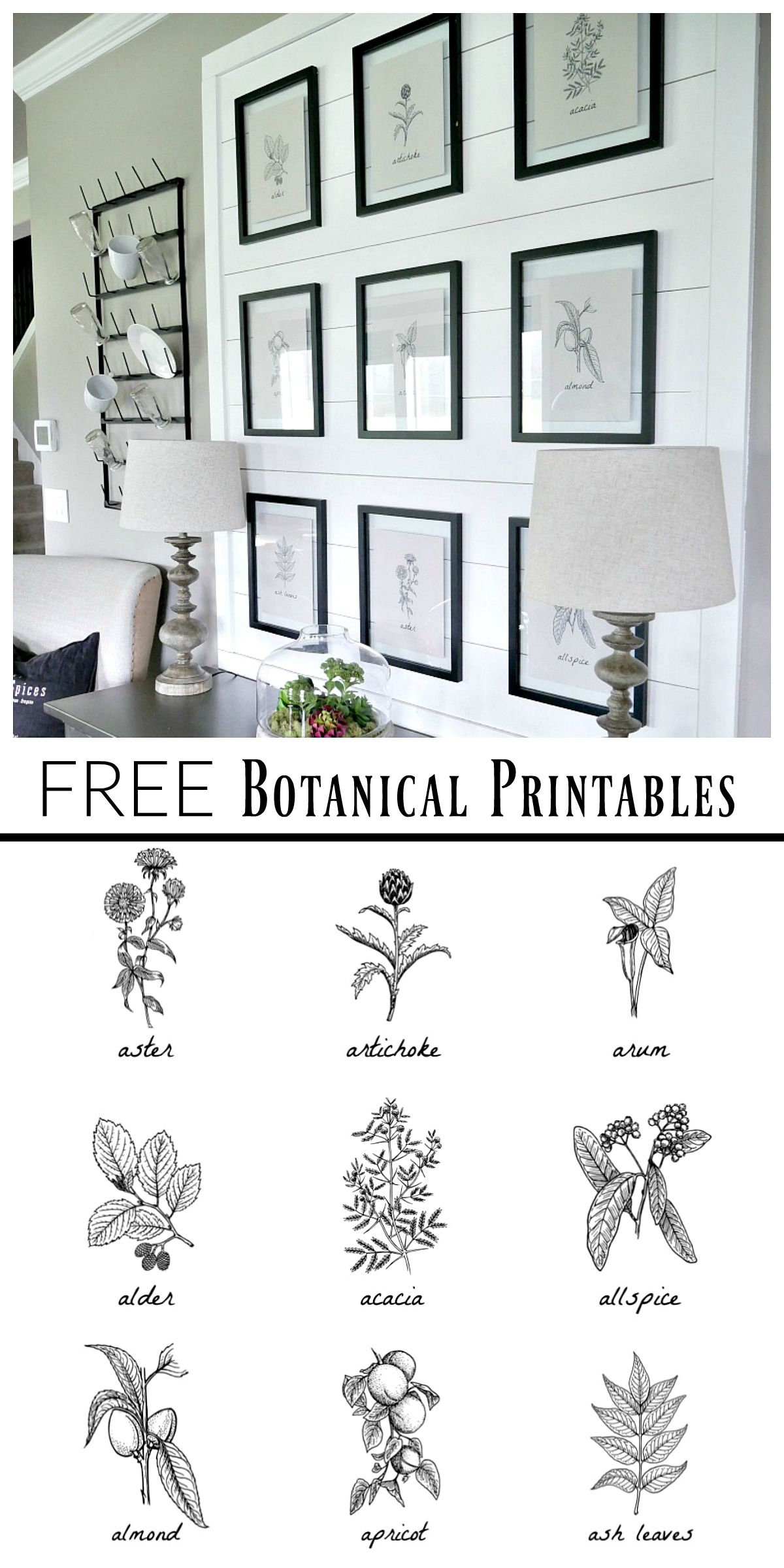 Free Botanical Prints | Bloggers' Best Diy Ideas | Dining Room - Free Black And White Printable Art