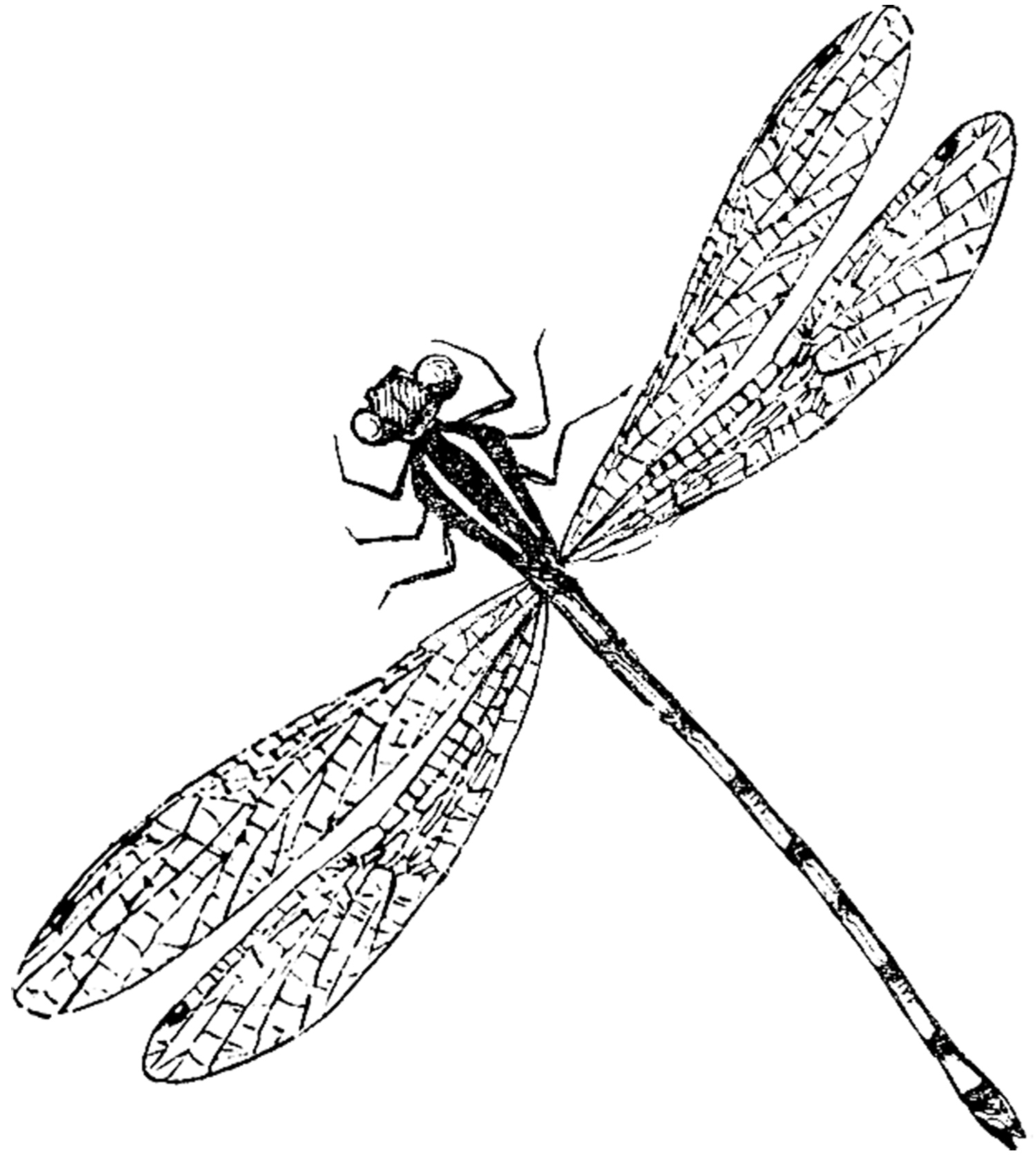 Free Drawings Of Dragonflies, Download Free Clip Art, Free Clip Art - Free Printable Pictures Of Dragonflies