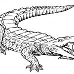 Free Printable Alligator Coloring Pages For Kids | Printables   Free Printable Pictures Of Crocodiles