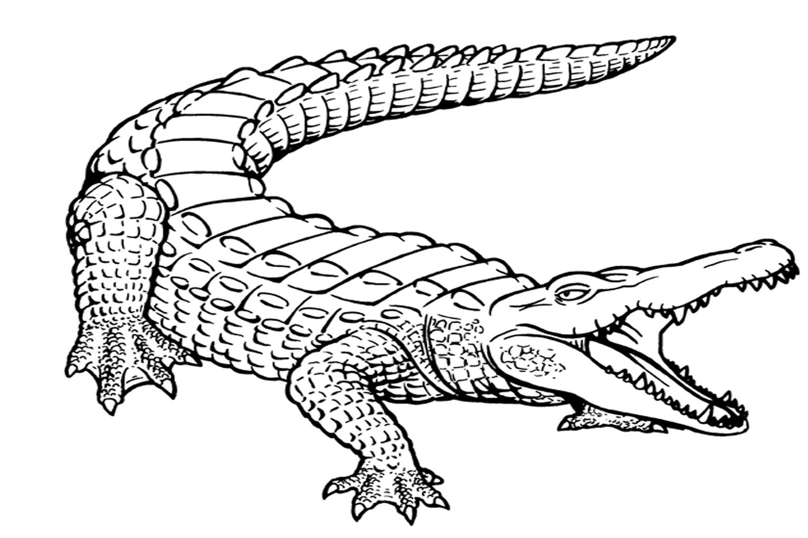 Free Printable Alligator Coloring Pages For Kids | Printables - Free Printable Pictures Of Crocodiles