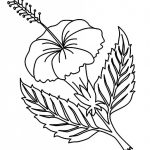 Free Printable Hibiscus Coloring Pages For Kids | Coloring Pages   Free Printable Hibiscus Coloring Pages