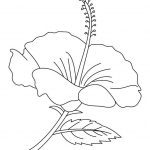 Free Printable Hibiscus Coloring Pages For Kids | Flowers & Other   Free Printable Hibiscus Coloring Pages