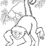 Free Printable Monkey Coloring Pages For Kids | Home Furniture   Free Printable Monkey Coloring Pages