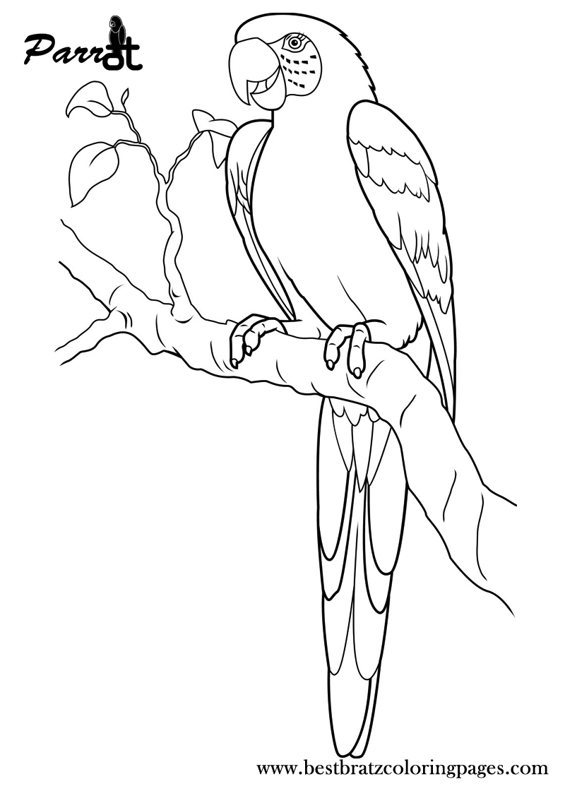 Free Printable Parrot Coloring Pages For Kids   Coloring Pages - Free Printable Parrot Coloring Pages