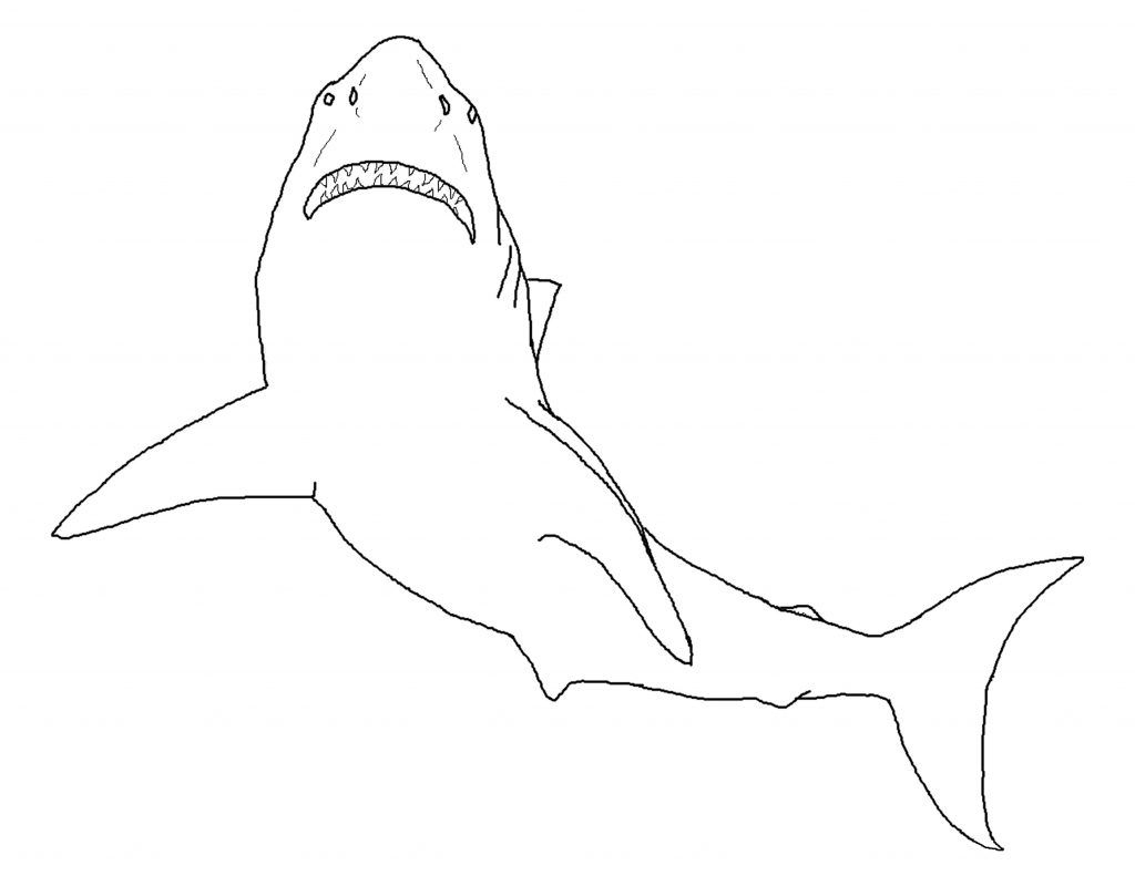 Free Printable Shark Coloring Pages For Kids   Sharks Coloring Pages - Free Printable Great White Shark Coloring Pages