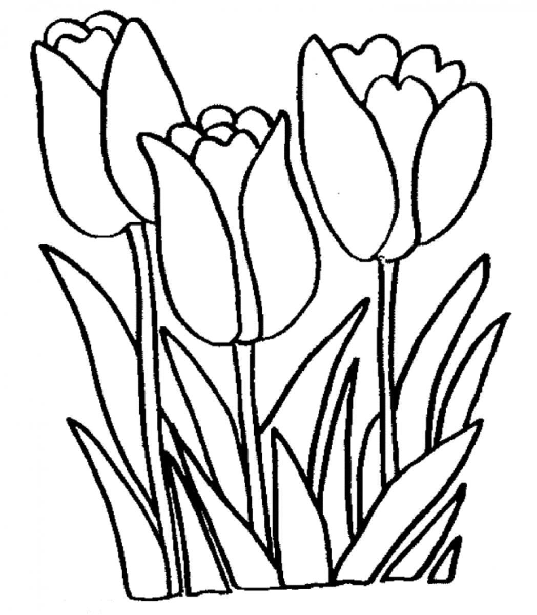 Free Tulip Coloring Pages With Printable Tulip Coloring Pages For - Free Printable Tulip Coloring Pages