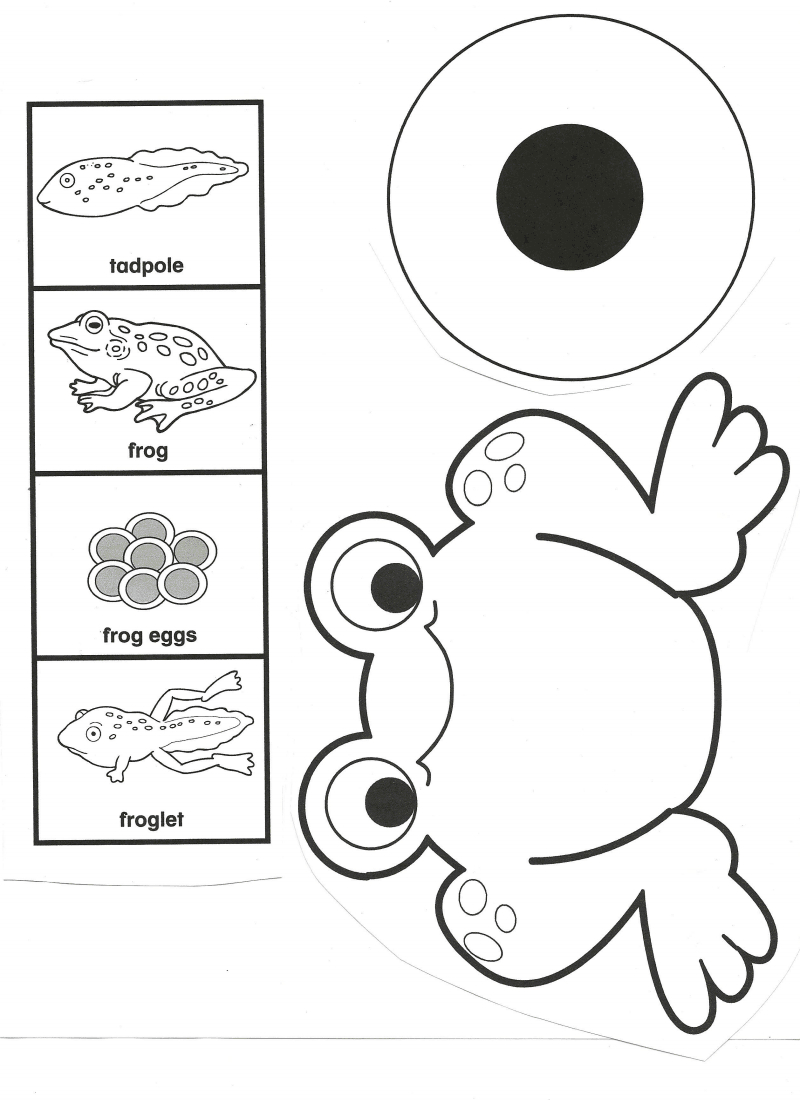 Frog Life Cycle.pdf - Google Drive | School Ideas | Pinterest | Frog - Life Cycle Of A Frog Free Printable Book