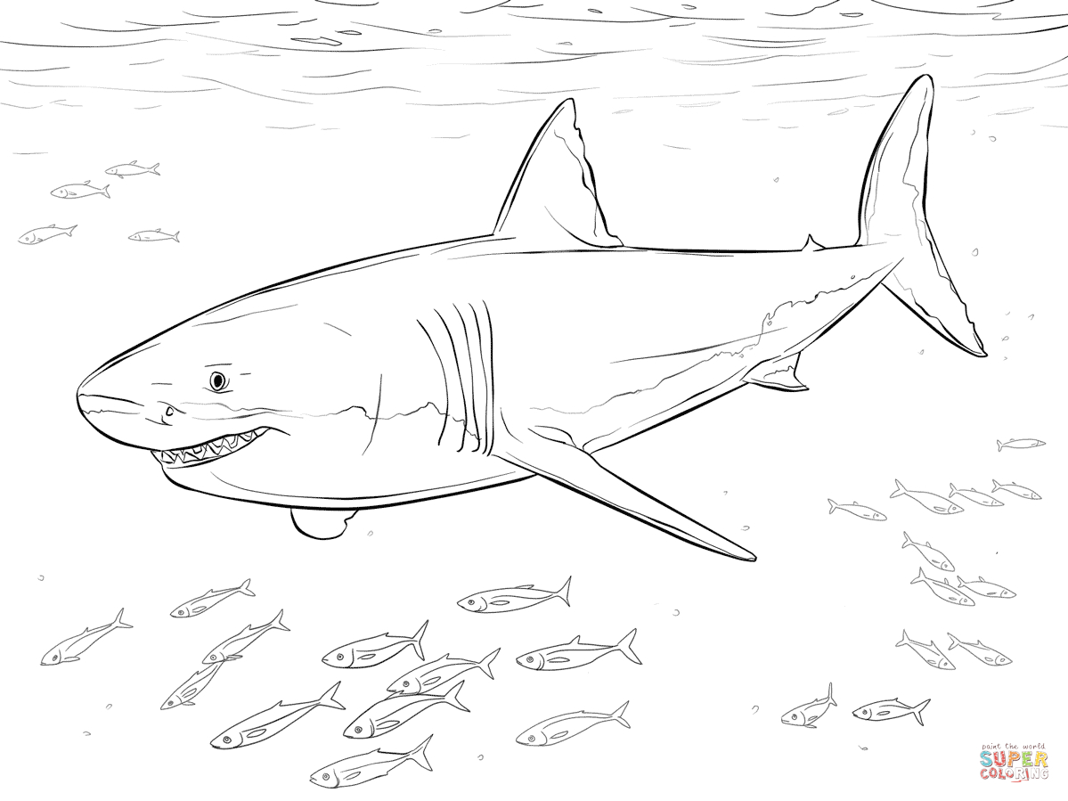 Great White Shark With Pilot Fishes Coloring Page   Free Printable - Free Printable Great White Shark Coloring Pages
