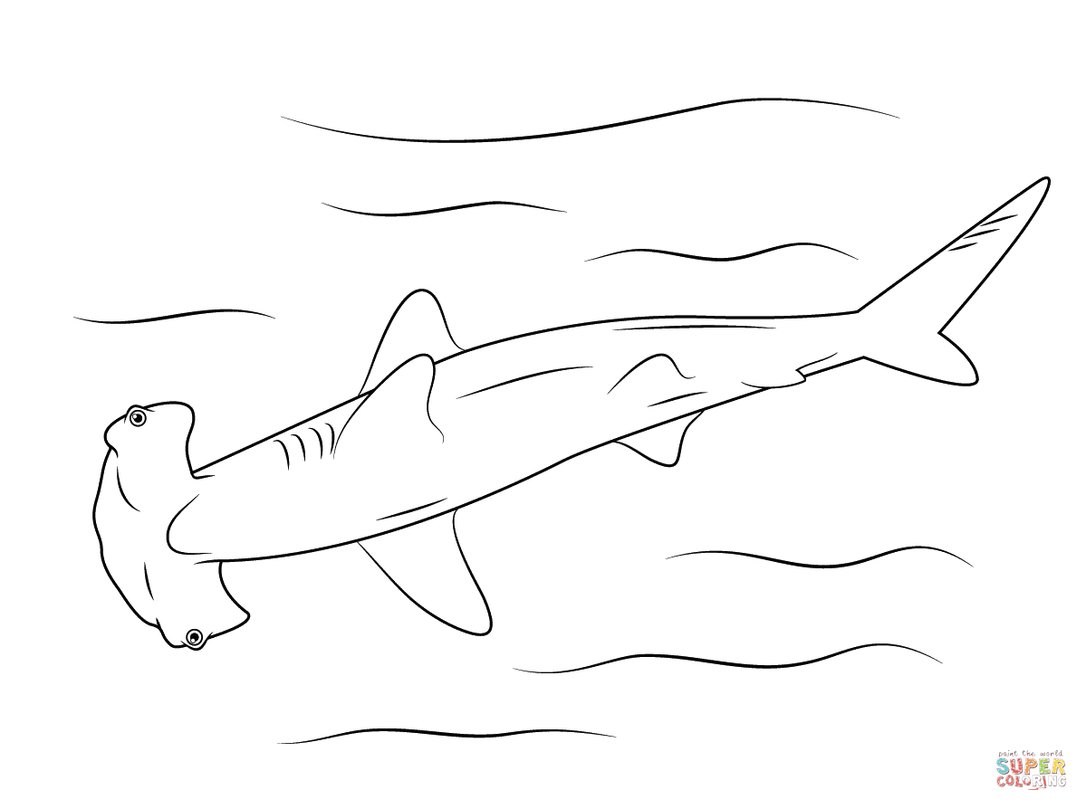 Hammerhead Shark Coloring Page   Free Printable Coloring Pages - Free Printable Great White Shark Coloring Pages