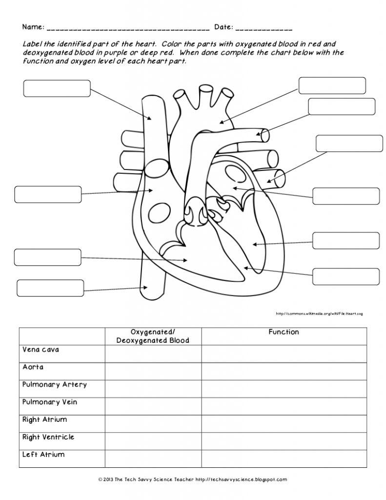 Human Anatomy Labeling Worksheets Human Body System Labeling - Free Printable Human Anatomy Worksheets