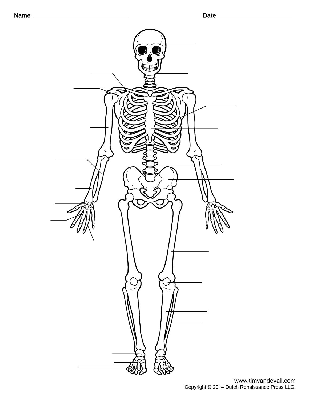 Human Skeleton Worksheet   Homeschool-Science   Skeleton Anatomy - Free Printable Human Anatomy Worksheets
