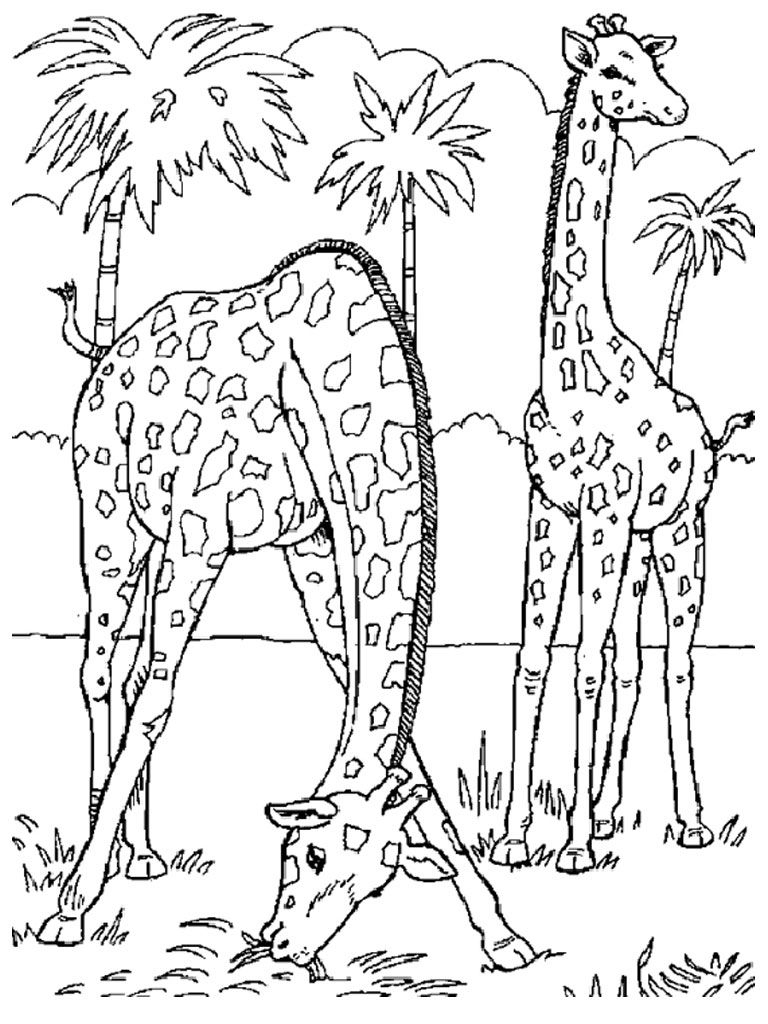 Image Result For Realistic Animal Coloring Pages For Adults | Kids - Free Printable Realistic Animal Coloring Pages