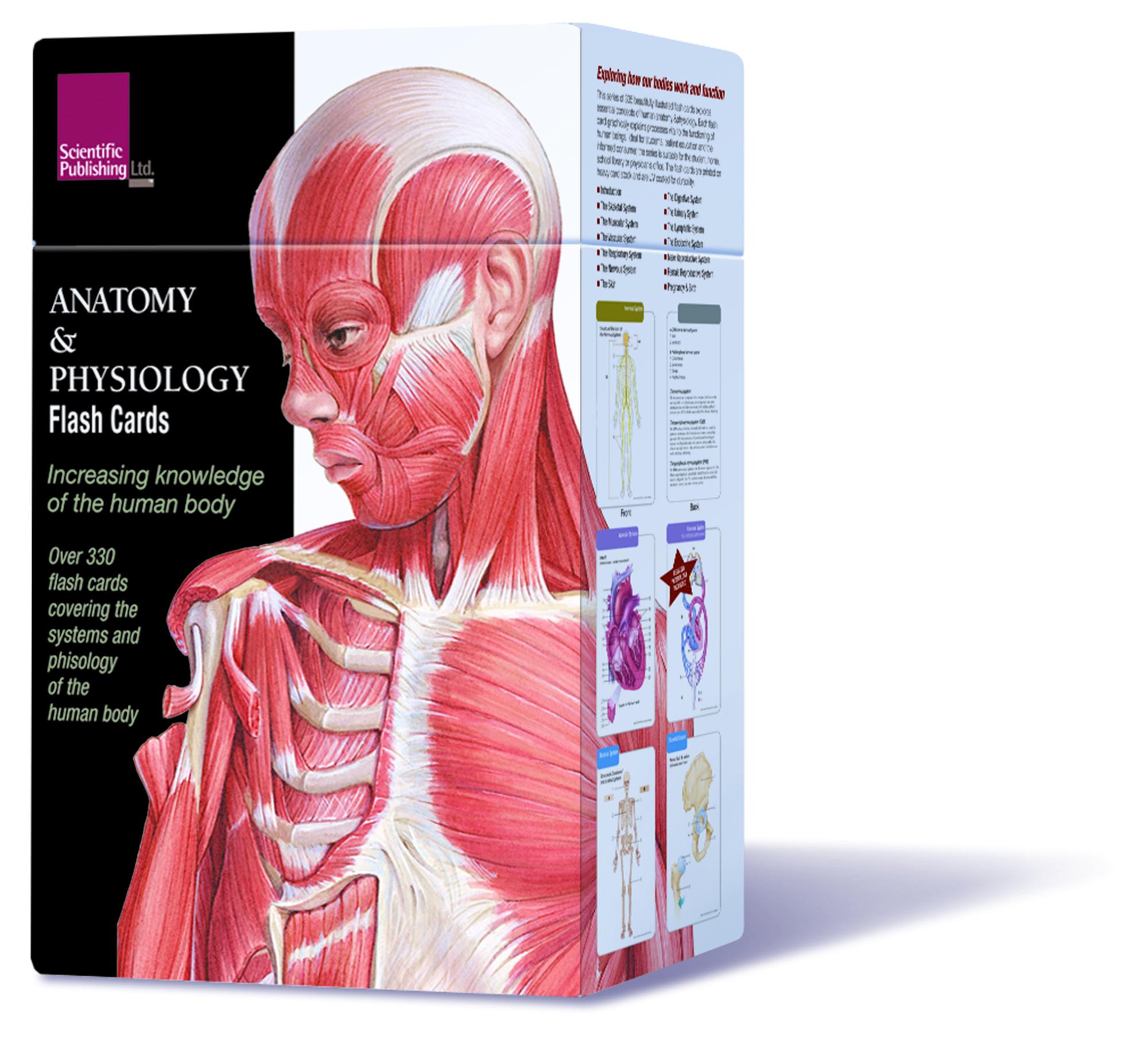 Muscle Anatomy Flash Cards And Anatomy Flash Cards Printable - Free Printable Muscle Flashcards