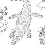 Nile Crocodile Coloring Page | Free Printable Coloring Pages   Free Printable Pictures Of Crocodiles