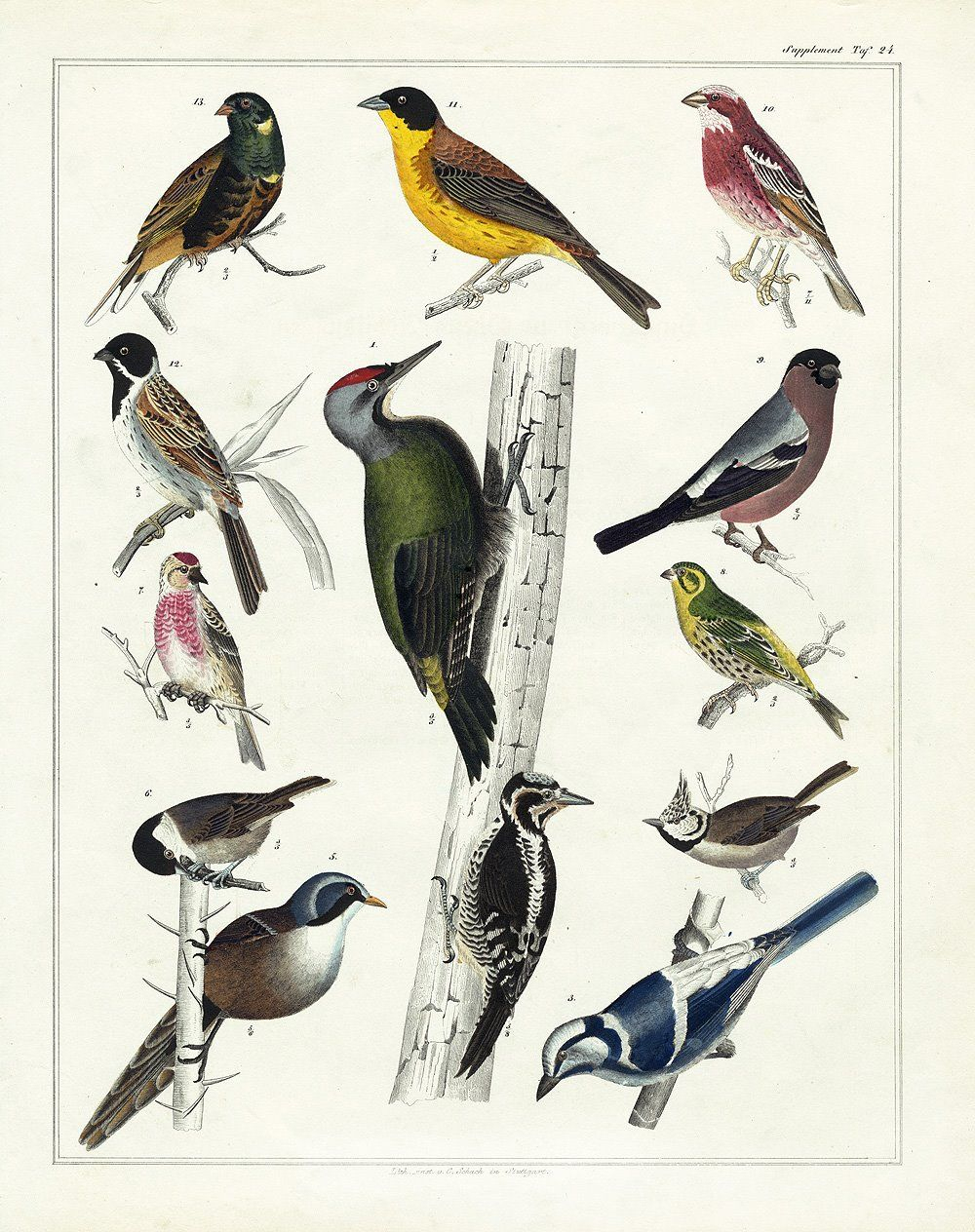 Over 25 Free Vintage Bird Printable Images   Remodelaholic #art - Free Printable Images Of Birds
