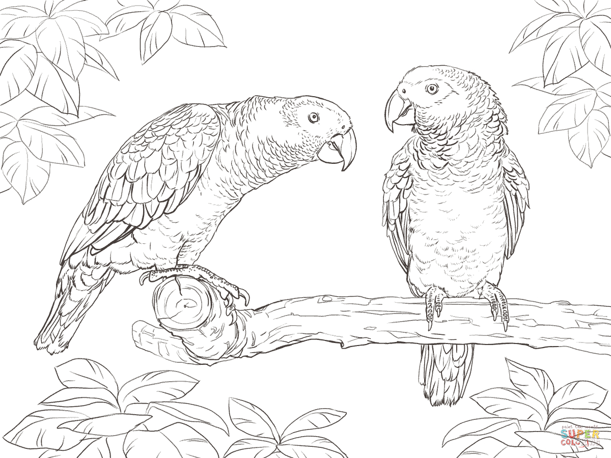 Parrots Coloring Pages   Free Coloring Pages - Free Printable Parrot Coloring Pages