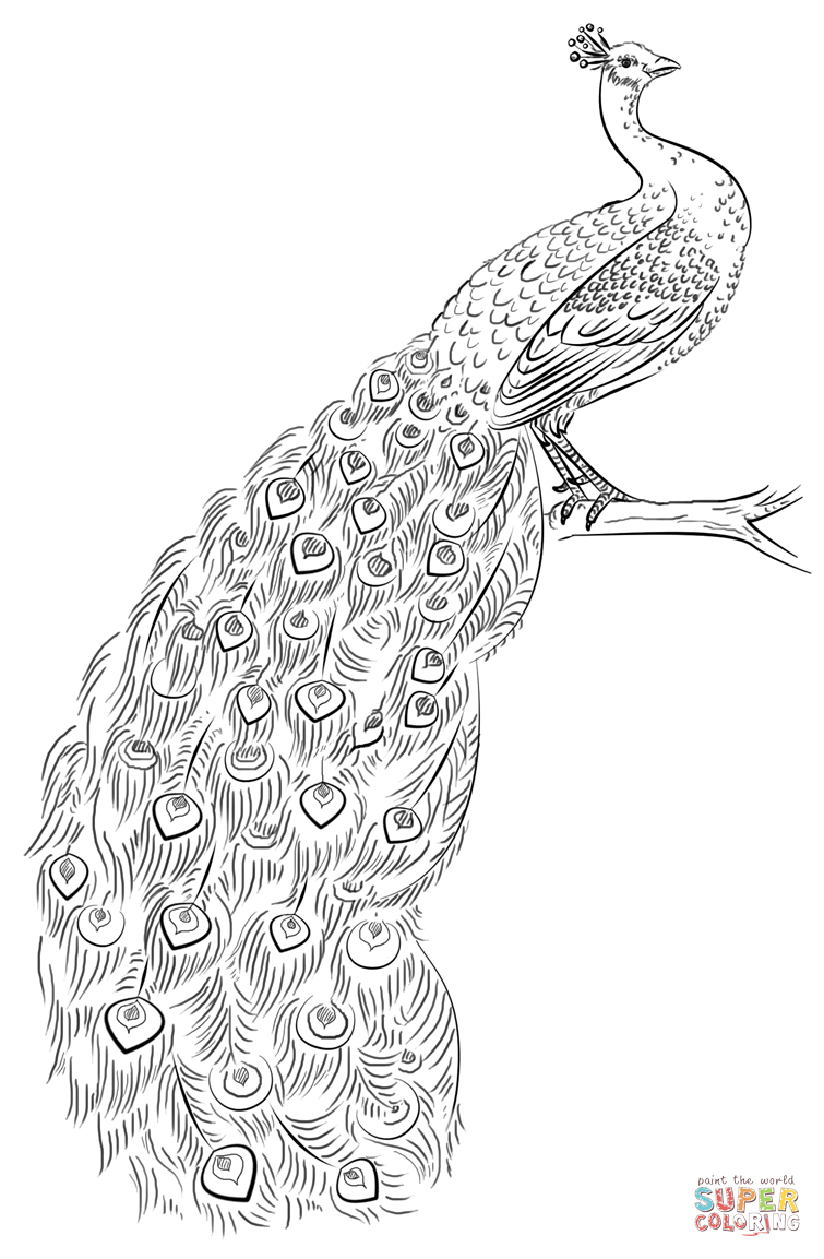 Peacock Coloring Page | Free Printable Coloring Pages | Mandalas - Free Printable Pencil Drawings