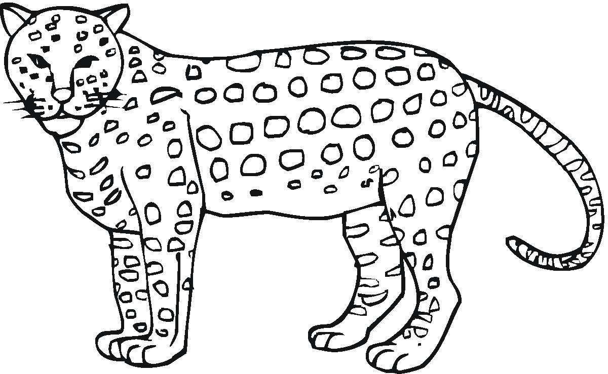 Pinjill Davidson Robinson On Quinn's Birthday | Pinterest - Free Printable Cheetah Pictures