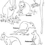 Pinruth Metka On Australia Unit | Australia For Kids, Australia   Free Printable Pictures Of Australian Animals