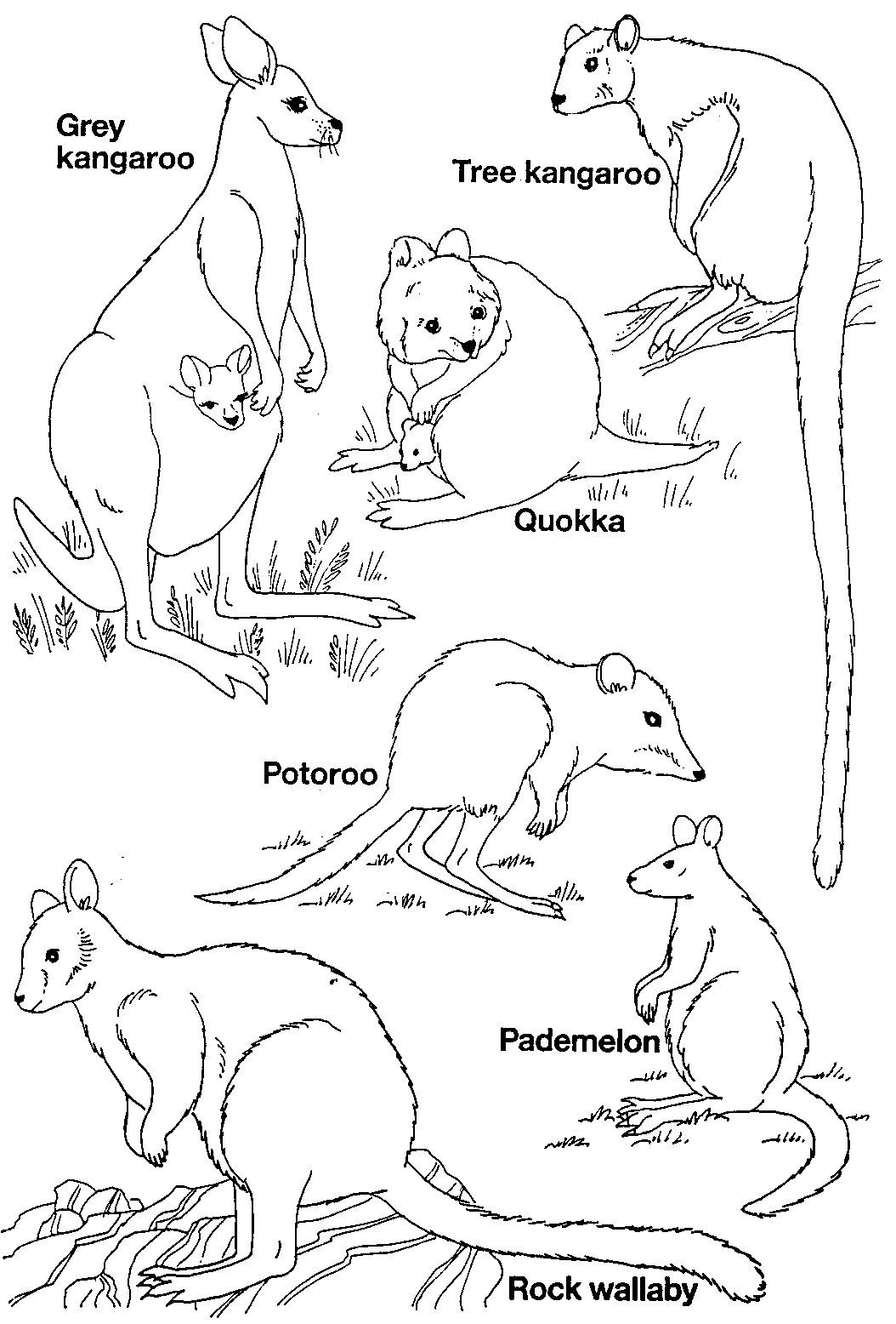 Pinruth Metka On Australia Unit | Australia For Kids, Australia - Free Printable Pictures Of Australian Animals
