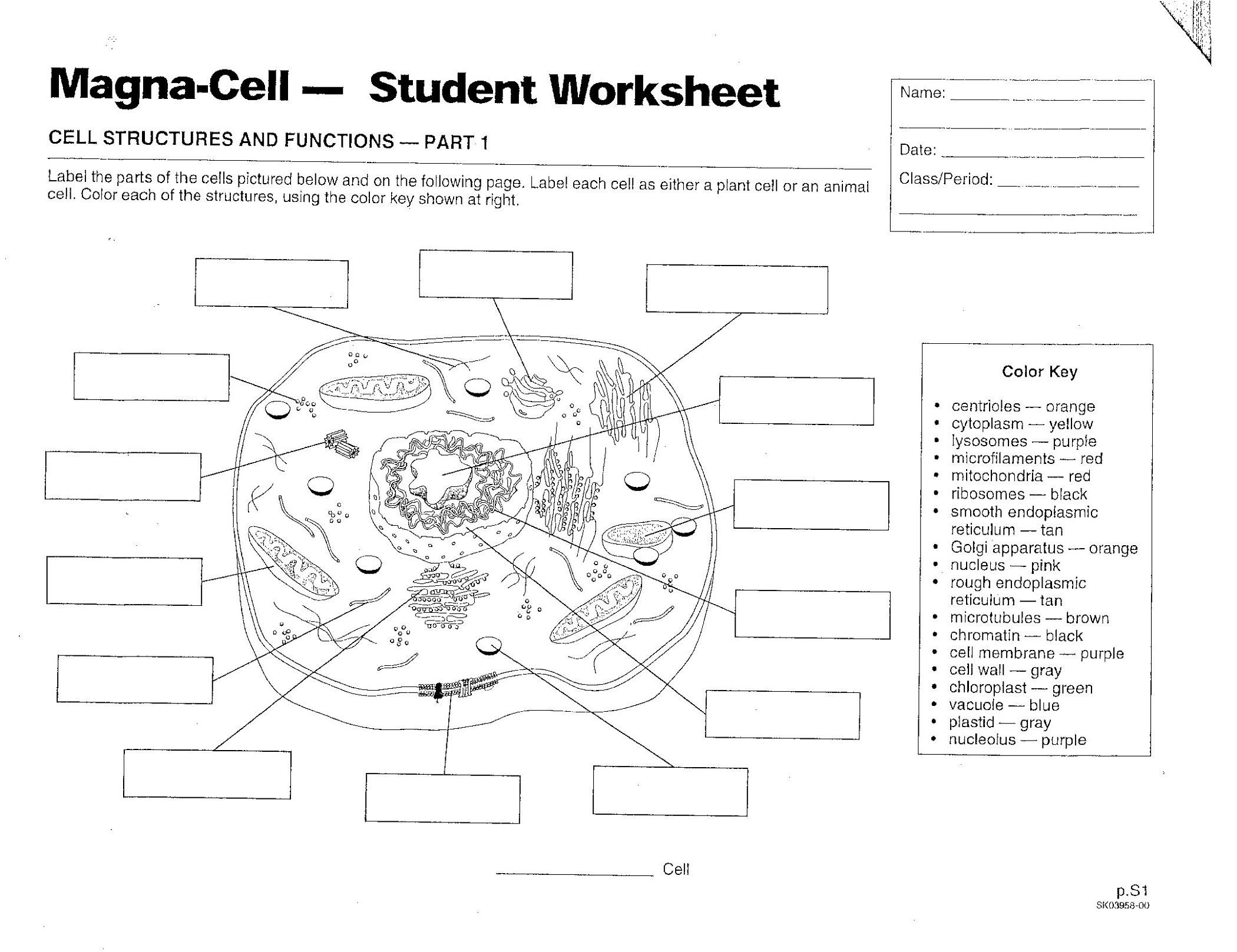Plant And Animal Cell Diagram Worksheet | Printable Diagram - Free Printable Cell Worksheets