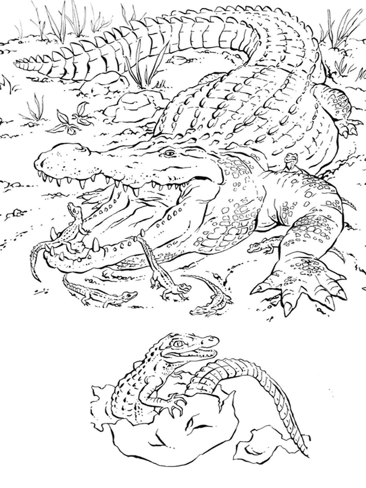 Realistic Animal Coloring Pages Advanced Coloring Pages Difficult - Free Printable Realistic Animal Coloring Pages