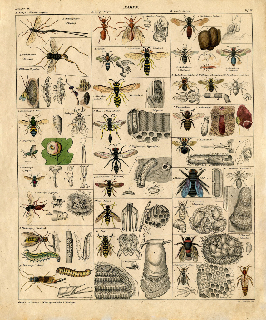 Remodelaholic | 25+ Free Incredible Insects Vintage Printable Images - Free Printable Vintage Art