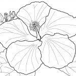 Search Results For Hibiscus Coloring Pages On Getcolorings   Free Printable Hibiscus Coloring Pages
