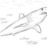 Shortfin Mako Shark Coloring Page | Free Printable Coloring Pages   Free Printable Shark Coloring Pages