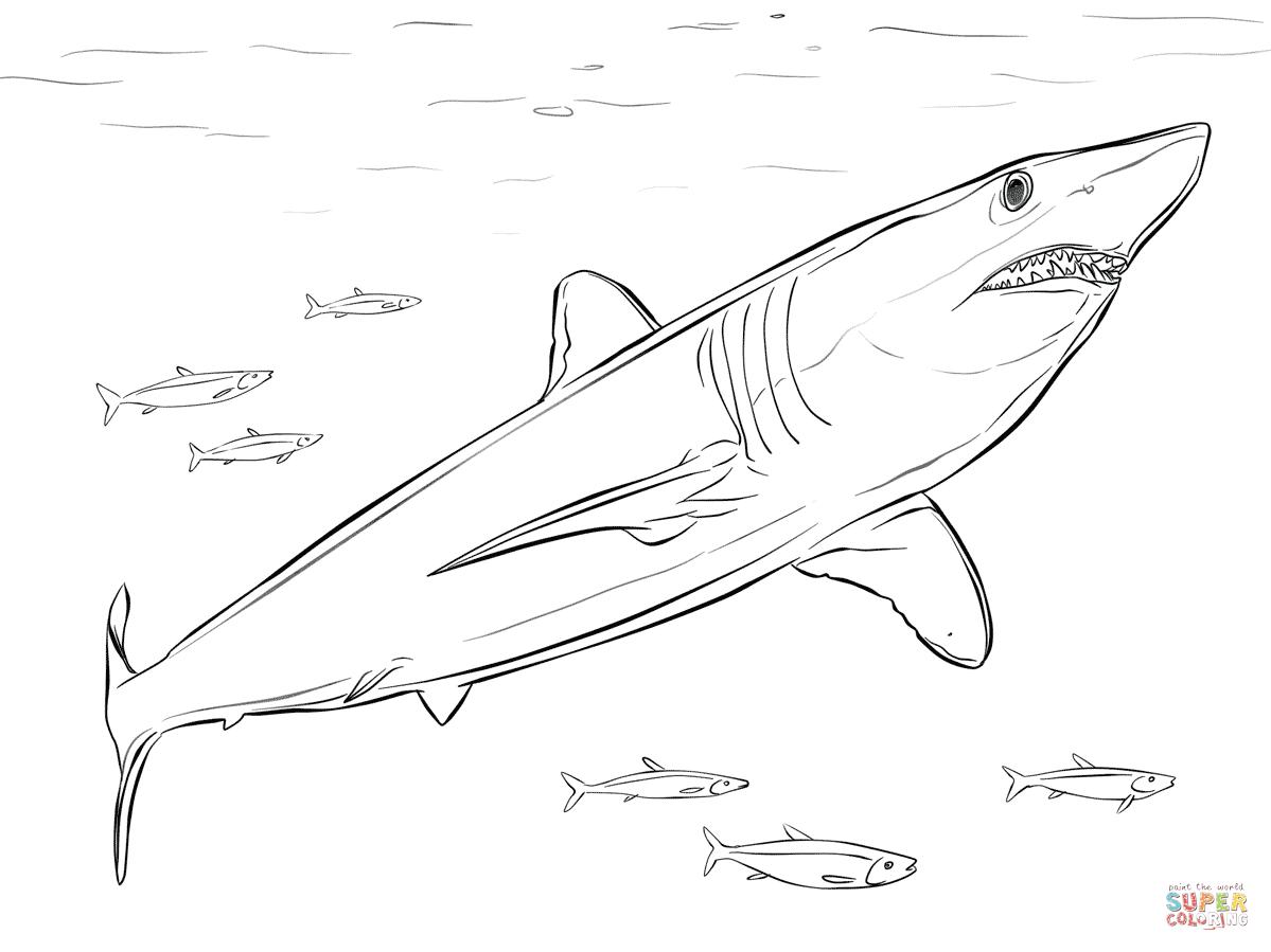 Shortfin Mako Shark Coloring Page | Free Printable Coloring Pages - Free Printable Shark Coloring Pages