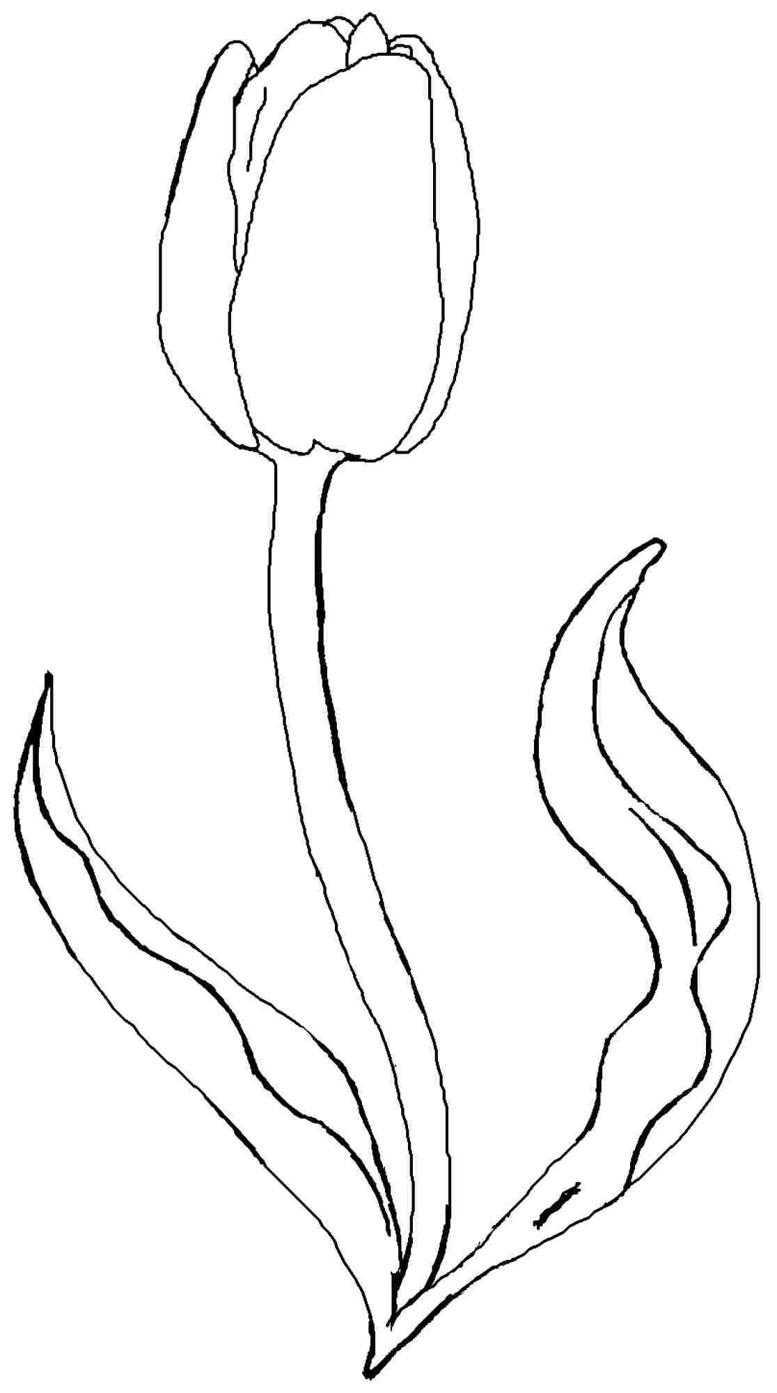 Tulip Flower Coloring Pages Free Printable Tulip Coloring | Sketch - Free Printable Tulip Coloring Pages
