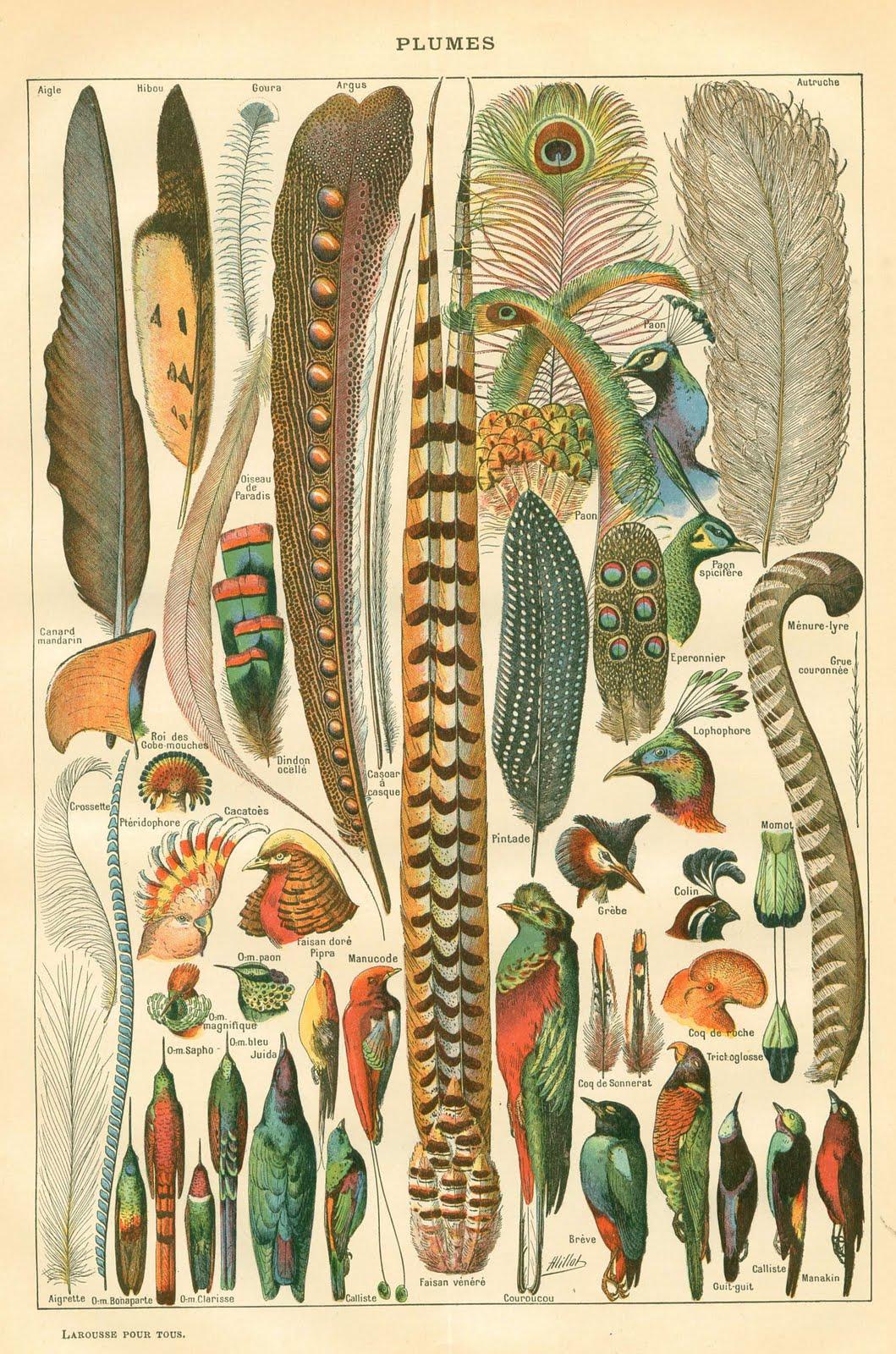 Vintage Instant Art Printable- Gorgeous Feathers - Plumes - The - Free Printable Vintage Art