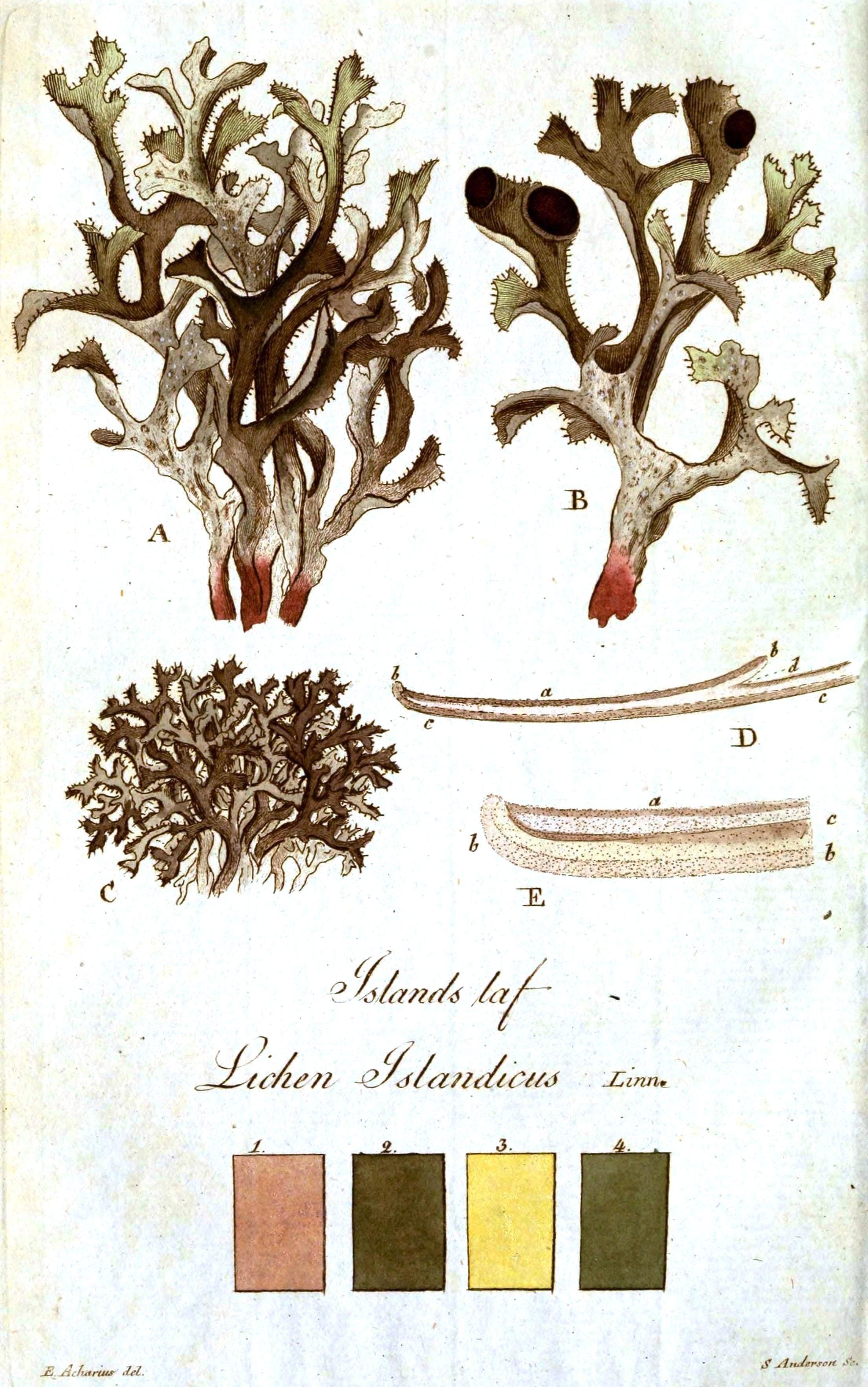Vintage Printables | Mycology | Free Printable Art, Vintage Art - Free Printable Vintage Art
