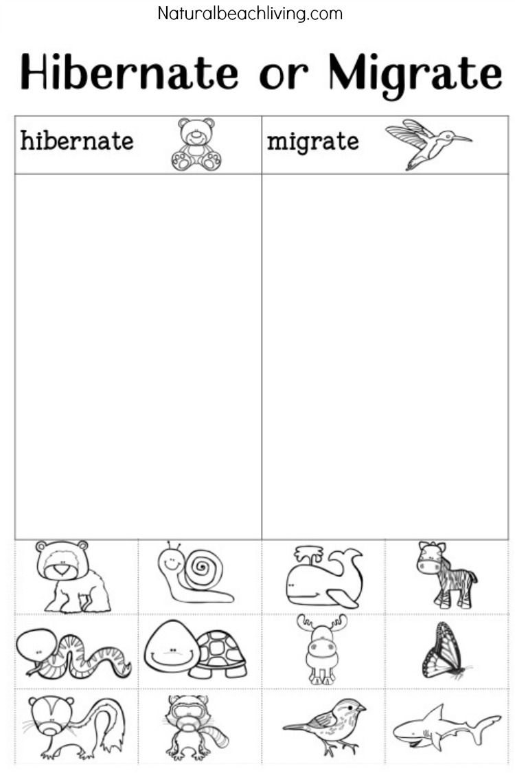 You'll Love These Winter Animals For Preschool Ideas | Montessori - Free Printable Hibernation Worksheets