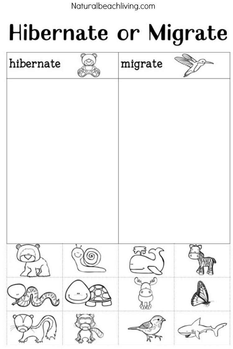 You'll Love These Winter Animals For Preschool Ideas | Montessori - Free Printable Hibernation Worksheets